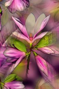 nf.9a Magnolia Bloom Artcard