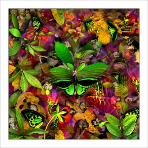 fp5. Birdwing Fabric Patch. 100% cotton fabric patches (organic) featuring unique nature designs by Australian artist Gerhard Hillmann. FREE POSTAGE WORLDWIDE! - Patchwork & Quilting..
