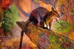 nf145b. Rock Wallaby's Artcard