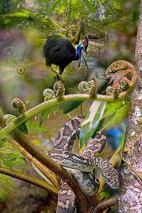 nf159a. Cassowary Snake Artcard