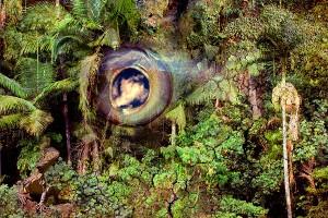 nf167. Forest Eyes Artcard
