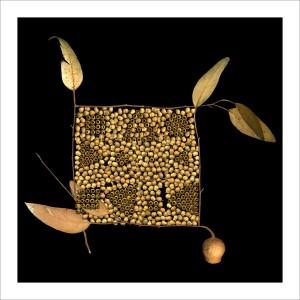 fp32. Wabi Gumnuts Fabric Patch
