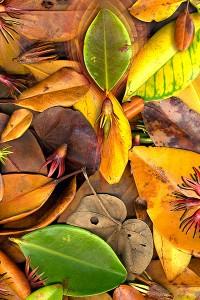 nf180. Mangrove Leaves Artcard