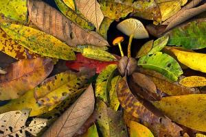 nf188. Mushroom Leaves Artcard