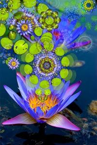 nf204. Lotus Rising Artcard