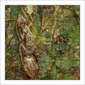 fp128. Leaf Tailed Gecko