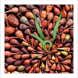 fp140. Gumnuts fabric patch
