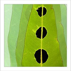 fp142. Holey Leaf fabric patch