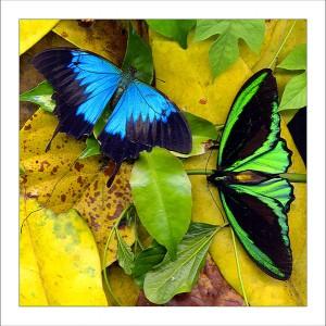 fp165. butteflies fabric patch