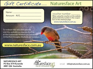 Sample gift certificate 1