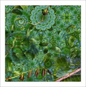 Leafy Katydid feature image
