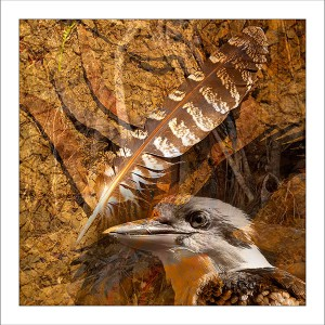 fp208. Kookaburra Feather fabric patch