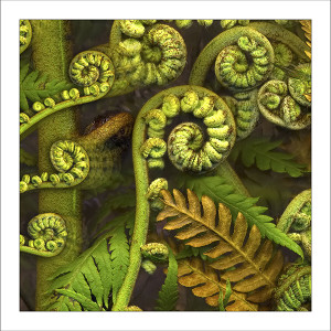 fp224. Fiddlehead fabric patch by Gerhard Hillmann