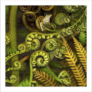 fp226. Green-eyed treefern fabric patch by Gerhard Hillmann