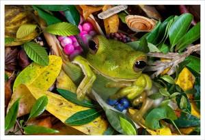 Baby whitelip frog fabric print