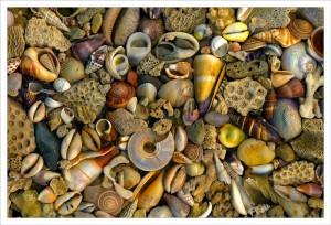 Seashell Delight fabric print
