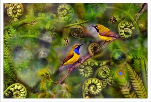 Sunbirds fabric print