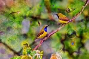 nf311. Sundala bird Artcard