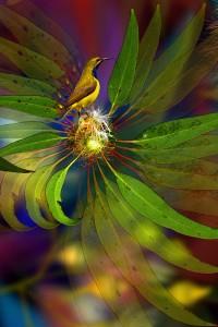nf337b. Flowering Sunbird Artcard
