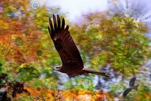 nf272. Flying Artcard