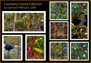 Cassowary country collection by gerhard hillmann