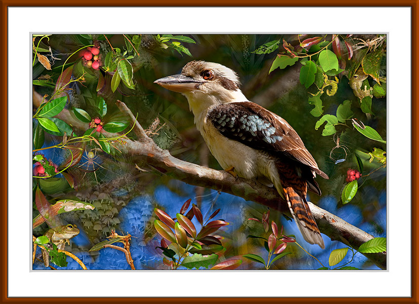 After the laugh,Limited edition pigment print, A portrait of the iconic Australian Kookaburra shown here after it has finished laughing. Mixed media artwork by Gerhard Hillmann. Fine art photography.