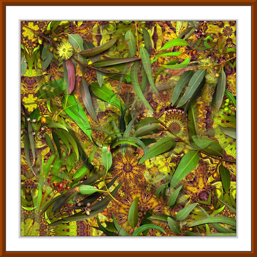 Eucalypt Sky fine art print by Gerhard Hillmann