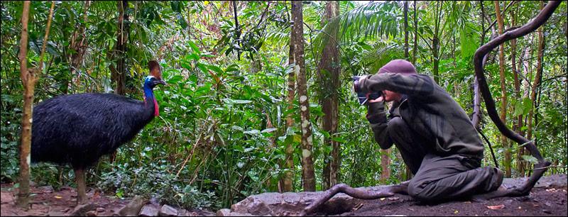 Gerhard photographing a Cassowary in the rainforest near Kuranda. photo by Steve Parish