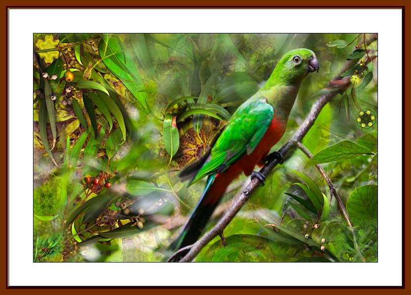 King Parrot limited edition print by Gerhard Hillmann