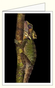nf374_boyds_forest_dragon_wo