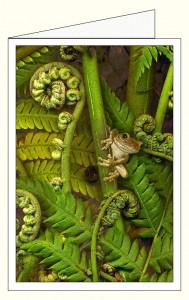 _wnf388f_treefern_frog_wo