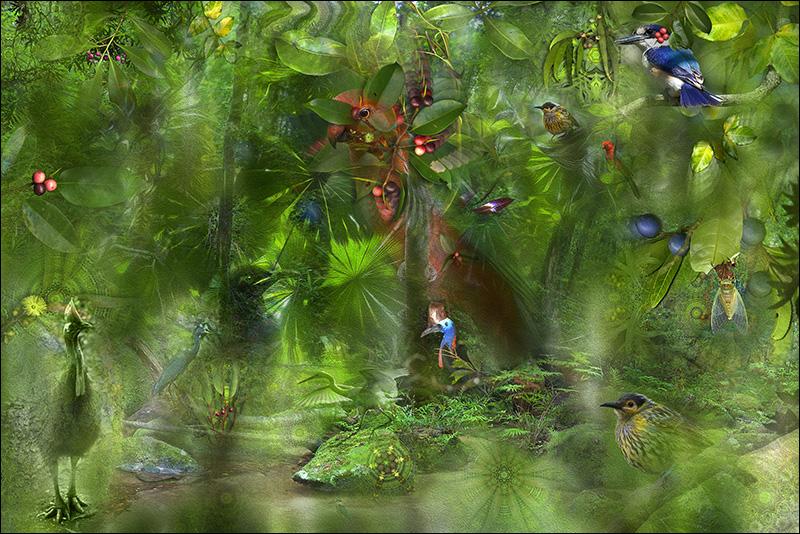 Birds Eye View by Gerhard Hillmann